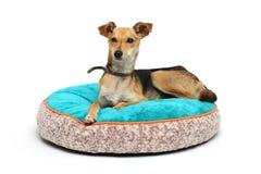 O cão no tapete foto de stock royalty free