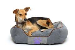 O cão no tapete fotografia de stock royalty free