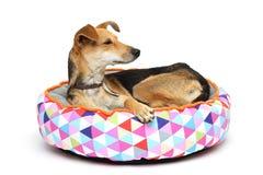 O cão no tapete fotografia de stock