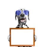 O cão nos vidros mantém o quadro em suas patas Fotos de Stock Royalty Free