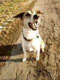 O cão olha acima ao camea 151 Fotografia de Stock