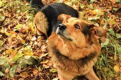 O cão olha acima na floresta Fotos de Stock