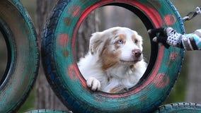 O cão olha através da roda vídeos de arquivo