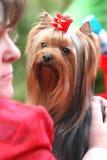 O cão olha a mulher imagens de stock