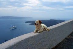 O cão olha o mar Foto de Stock Royalty Free