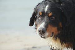 O cão olha o mar próximo Fotos de Stock Royalty Free