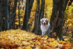 O cão olha para fora atrás da árvore foto de stock royalty free