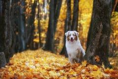 O cão olha para fora atrás da árvore imagens de stock royalty free