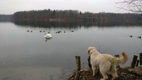 O cão olha sobre o mar Foto de Stock Royalty Free