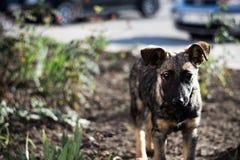 O cão ou o cachorrinho marrom novo desabrigado olham-no fotos de stock