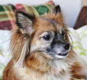 O cão pequeno está feliz imagem de stock royalty free