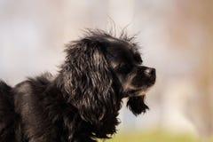 O cão pequeno olha o alimento acima de espera fotos de stock