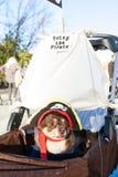 O cão pequeno veste o traje do pirata na parada eclético de Atlanta Fotos de Stock