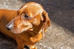 O cão persegue animais foto de stock