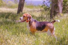 o cão persegue animais do cachorrinho imagem de stock royalty free