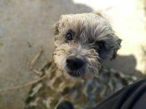 O cão preto dos olhos dos botões imagem de stock