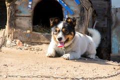 O cão preto e branco encontra-se pela cabine fotos de stock
