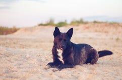 O cão preto grande com olhos fechados encontra-se na areia na praia Fotos de Stock