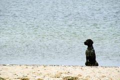 O cão preto senta-se em uma praia Foto de Stock