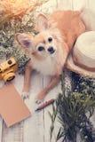 O cão que bonito do marrom da chihuahua o assento relaxa com caderno da flor veio foto de stock royalty free