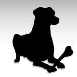 O cão que come Imagens de Stock Royalty Free