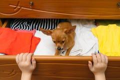 O cão que escondeu na caixa Foto de Stock