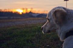 O cão que pensa no por do sol foto de stock