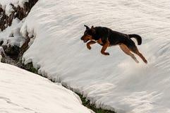 O cão que salta na neve imagens de stock