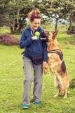 O cão reage erradamente ao comando do instrutor Fotos de Stock