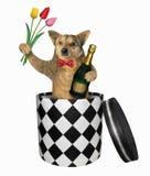 O cão sai da caixa imagem de stock royalty free