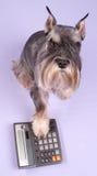 O cão senta-se Imagem de Stock Royalty Free