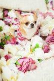 O cão senta-se cercado por flores fotografia de stock royalty free