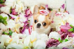 O cão senta-se cercado por flores fotos de stock royalty free