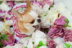 O cão senta-se cercado por flores imagem de stock