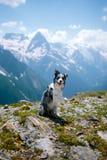 O cão senta-se e acenando seu pawat o cais contra rochas do fundo e da neve das montanhas foto de stock