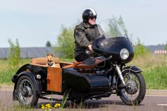 O cão senta-se em um side-car da motocicleta imagens de stock royalty free