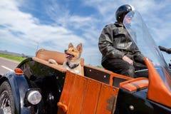O cão senta-se em um side-car da motocicleta imagem de stock
