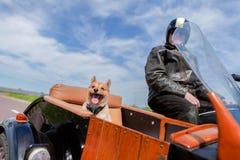 O cão senta-se em um side-car da motocicleta fotografia de stock