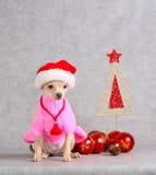O cão senta-se em um vestido cor-de-rosa e em um chapéu de Santa Claus Cachorrinho branco pequeno que levanta com decorações do N Imagens de Stock Royalty Free