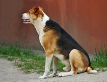 O cão senta-se na estrada Fotos de Stock