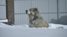 O cão sente o plano geral vídeos de arquivo
