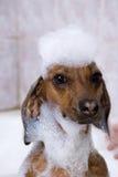 O cão tem um banho Fotografia de Stock Royalty Free