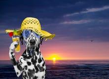 O cão tem um resto na praia do verão no por do sol Imagens de Stock Royalty Free
