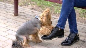 O cão toca nos pés humanos do ` s com sua pata filme