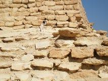 O cão toma sobre a ruína antiga em Egito foto de stock