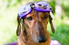 O cão toma um banho imagem de stock