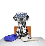 O cão trabalha como um gerente no escritório Imagem de Stock