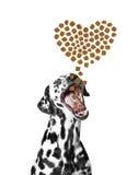 O cão trava o alimento seco sob a forma dos corações que caem do abov Imagem de Stock