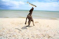 O cão trava um peixe Fotografia de Stock