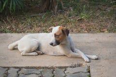 O cão treinado poderá sentar-se ainda Para esperar o comando seguinte imagens de stock